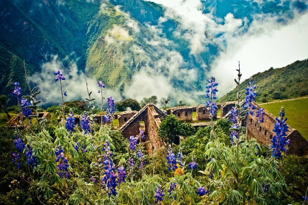 Lupins bloom above the ancient Inca ruins of Choquequirao in the Andes, Peru. Photo: Adriana Von Hagen
