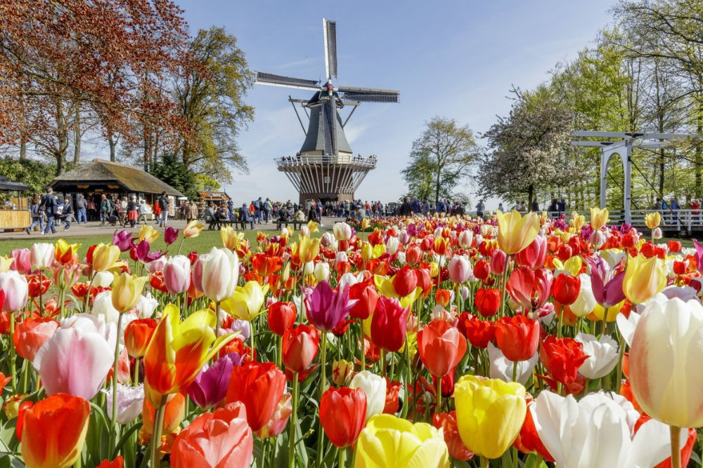 Spring is tulip time in the Netherlands. Photo: Keukenhof Gardens