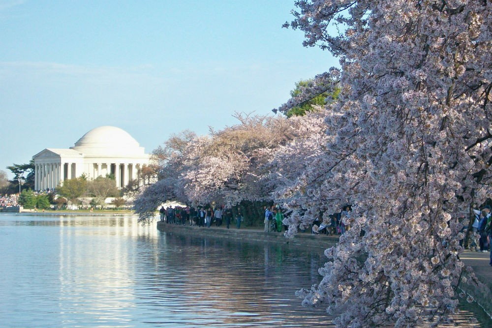 National Cherry Blossom Festival, Washington, D.C. Photo: National Cherry Blossom Festival