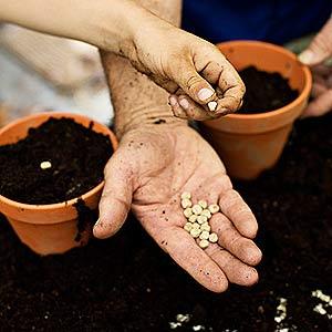 OFM: Gardening