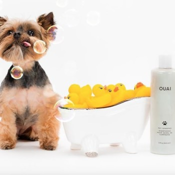 OFM: products